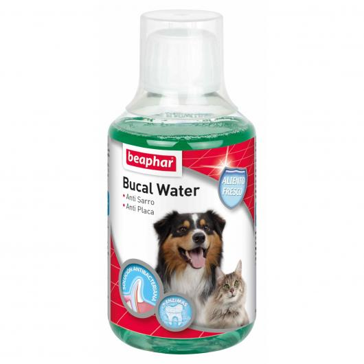 Bucal water, 250 ml