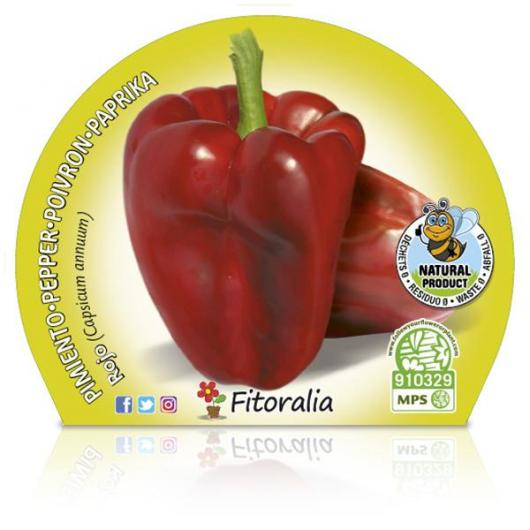 Eco Red Pepper Pot mudas 10,5 centímetros de diâmetro