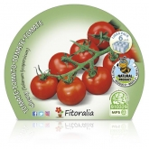 Plantón ecológico de Tomate Cherry Redondo pack 6 ud. 54x43mm