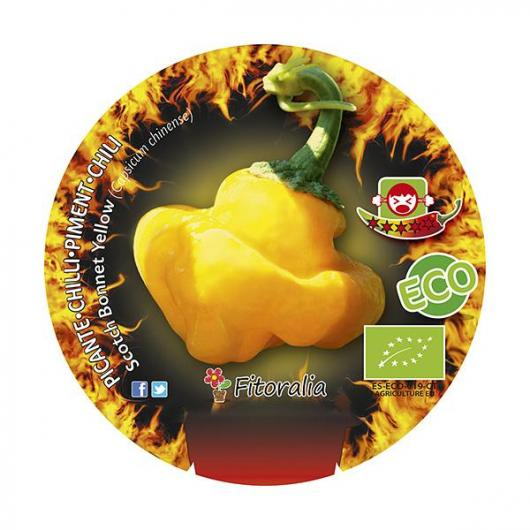 Plantón ecológico de Picante Scotch Bonnet Yellow maceta  1L