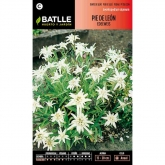 Sementes de Lady Mantle Edelweiss