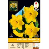 Bulbo di Narciso tromba giallo